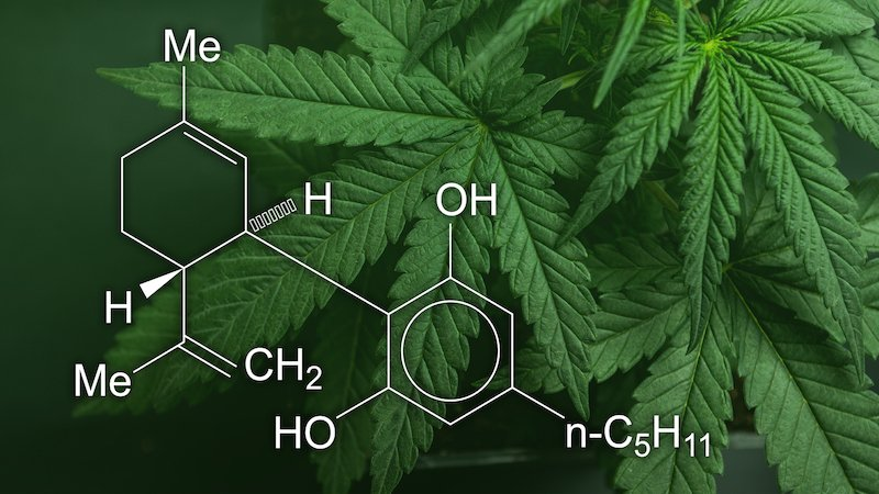 What Cannabinoids Are in CBD Oils